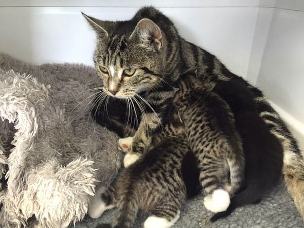 Mother_cat2