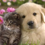 cat_dog-wallpaper