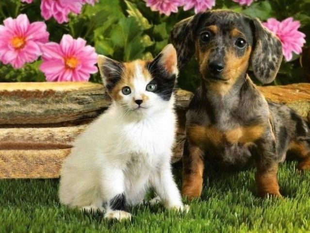 cats_dogs_05