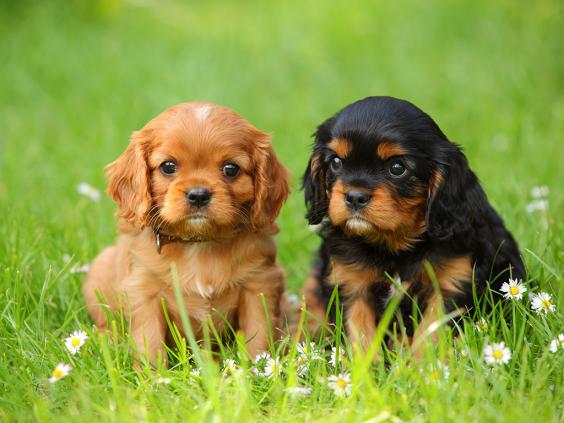 dogs_two