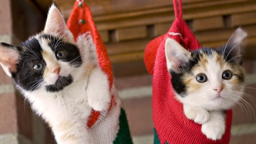 totally-cute-pet-christmas-pic-6